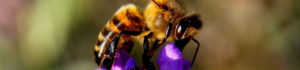 bee-1040521_1280-small